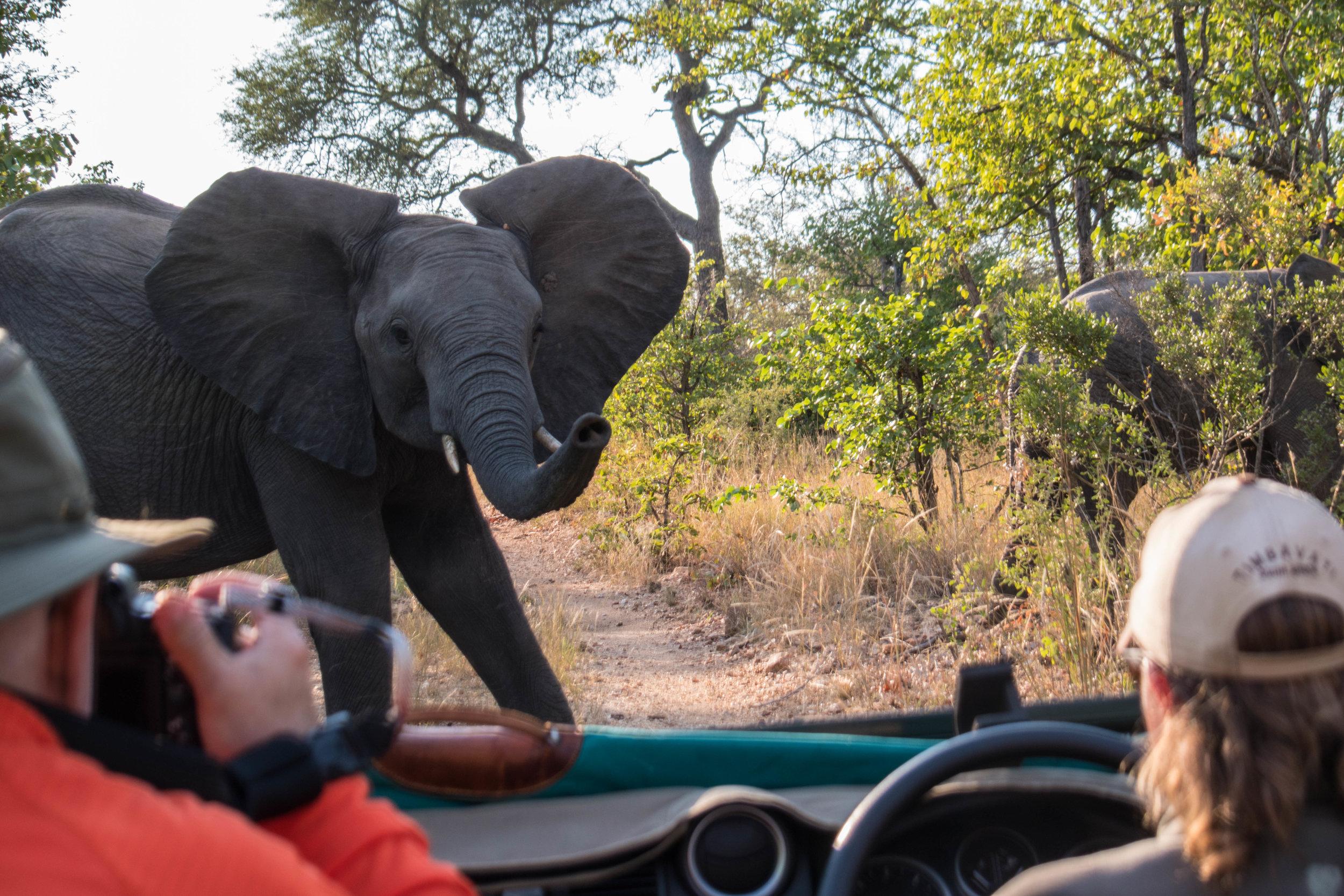 20170506South Africa-113.jpg
