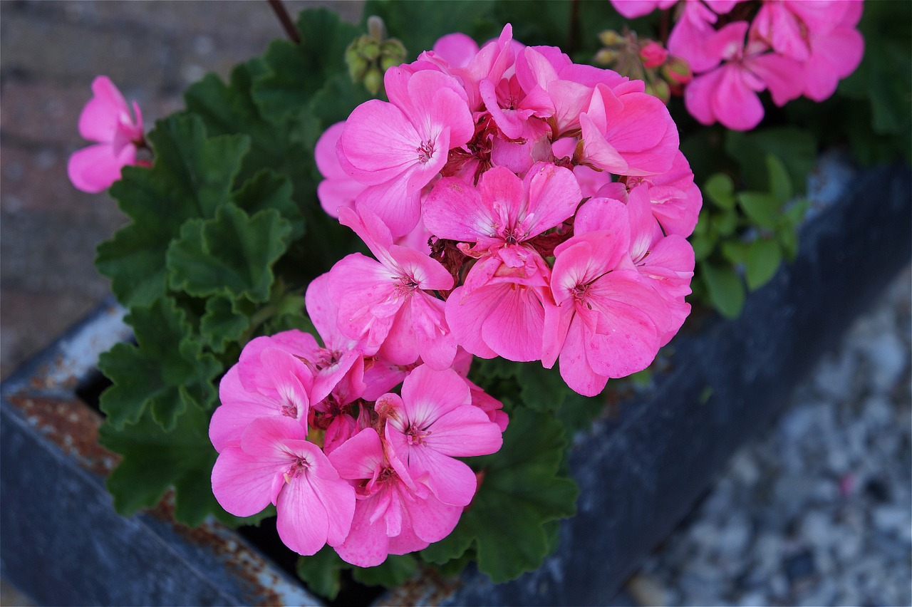 pink-1522159_1280.jpg