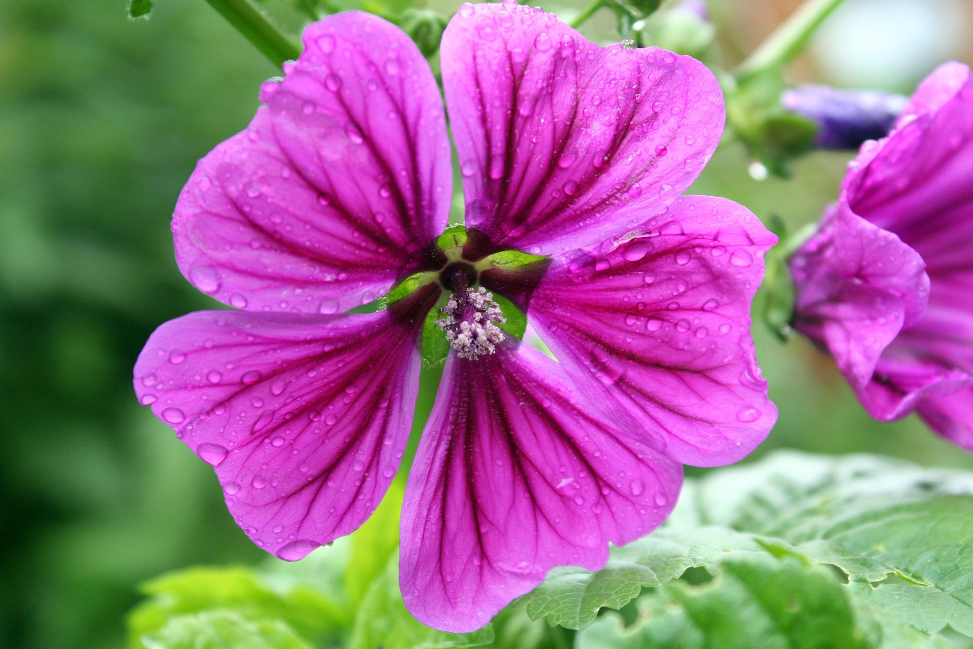 flower-3088387_1920.jpg