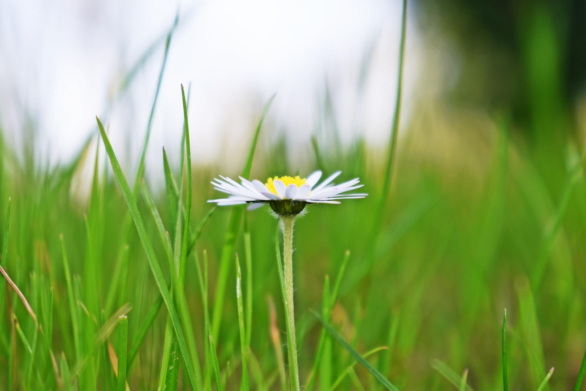 pelouse.jpg