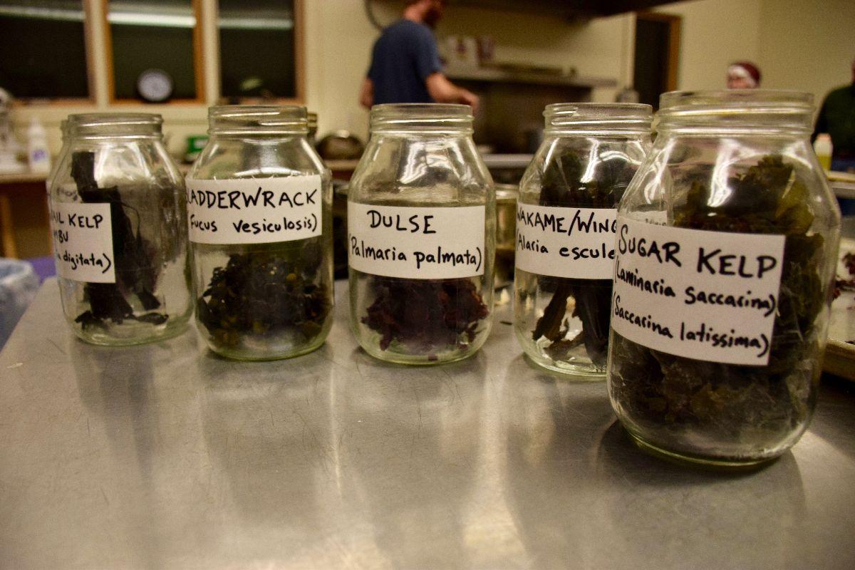Seaweed in Jars.jpg