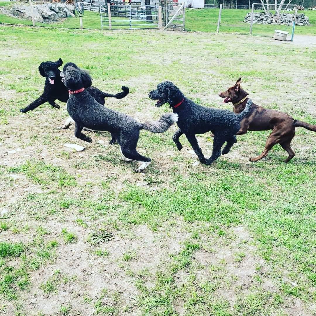 The Wagging Trails Off-Leash gang having a blast!