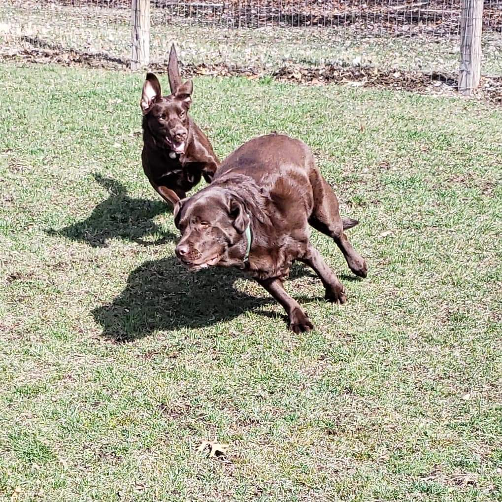Moose and Otis having a blast playing at our Wagging Trails Group