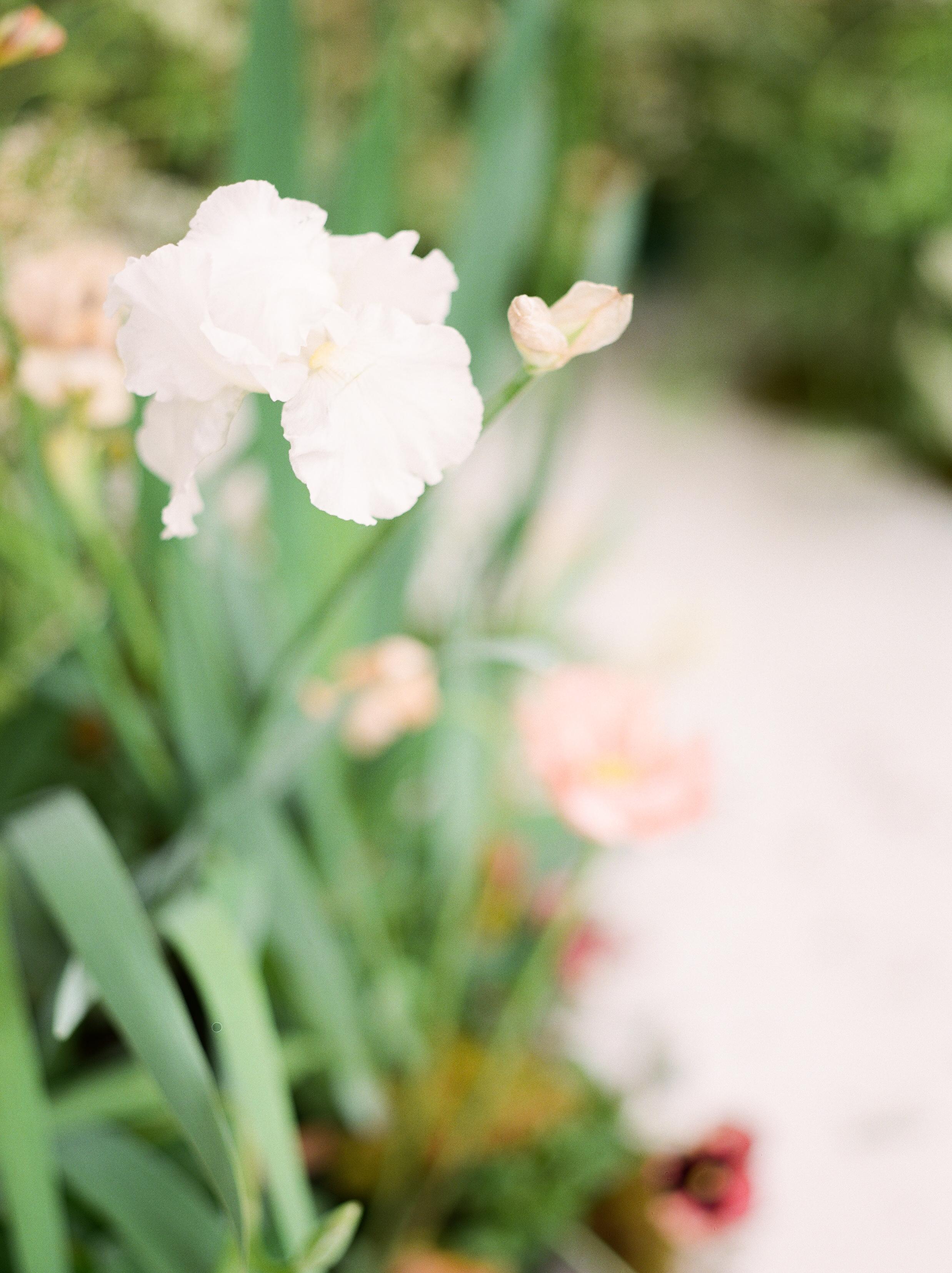 olya_vitulli_loom_bloom-8b.jpg