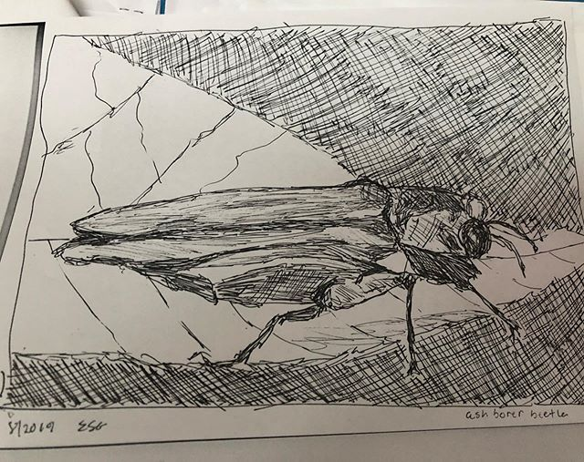 Wrote a poem about the ash borer beetle for my @fineartsworkcenter workshop with Fred Marchant and drew a beetle so I could better empathize ❤️