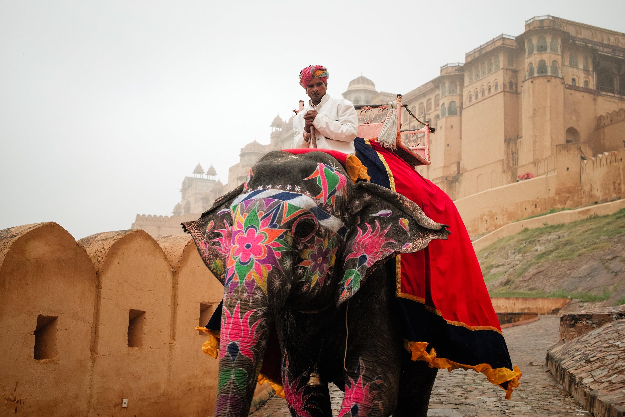 India_2018-386.jpg