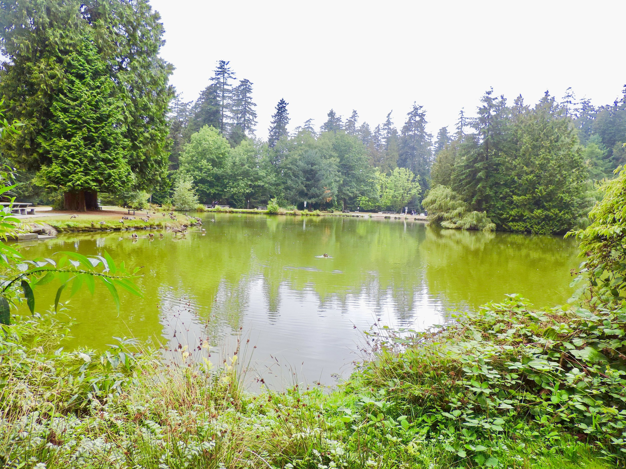 & of course... we visited Lower Pond