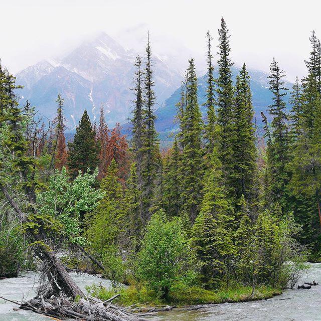 Throwback   June 2019 - Jasper 📍#canadiannationalparks #canada #jasper #jaspernationalpark