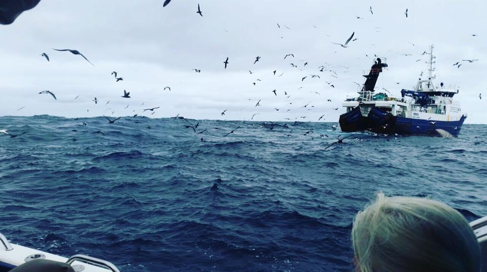 Birds with trawler.jpg