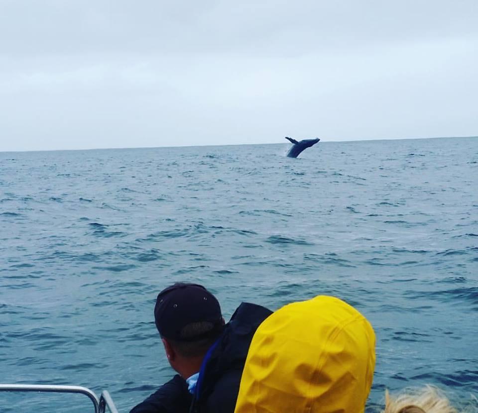 Humpack Whale.jpg