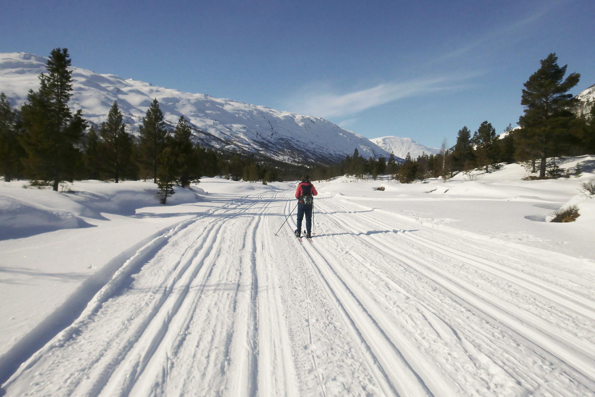 Fine skispor.JPG