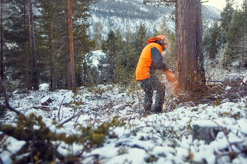 Skogbruk - Skogen er ein viktig ressurs for Skjåk Almenning.