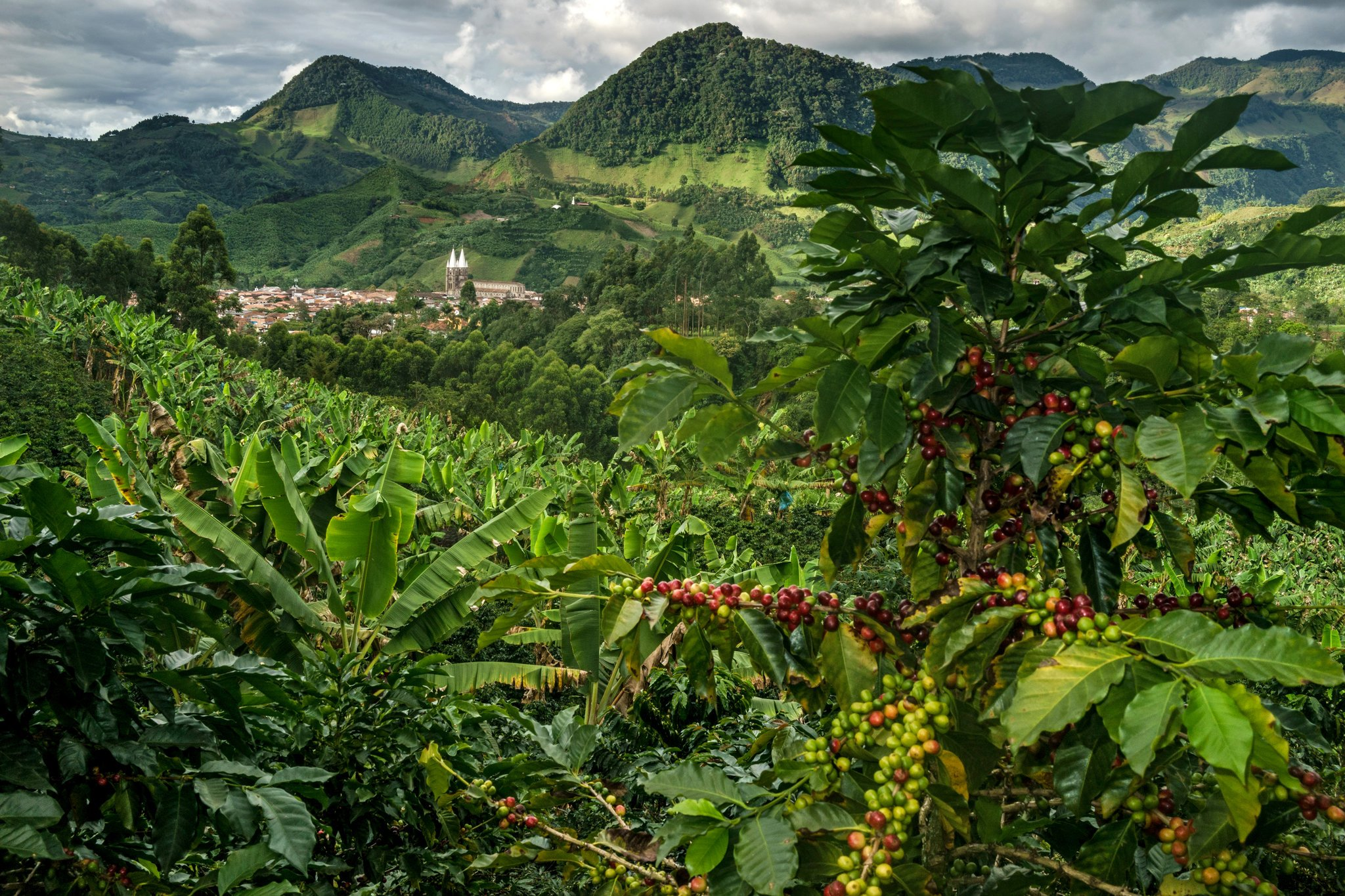 Colombia Coffee Beans