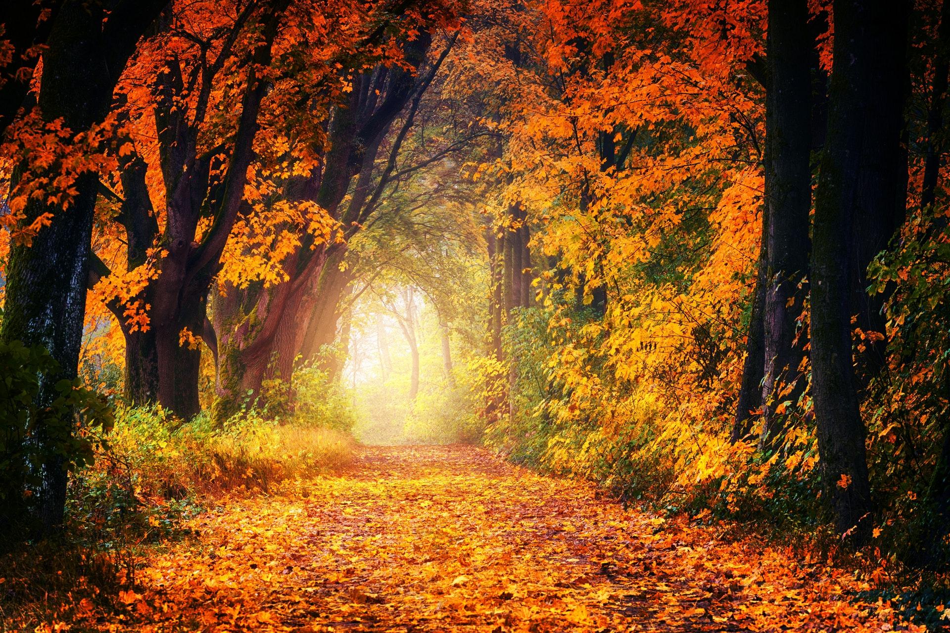 Heavenly Hygge Retreat - November 7th - 11th