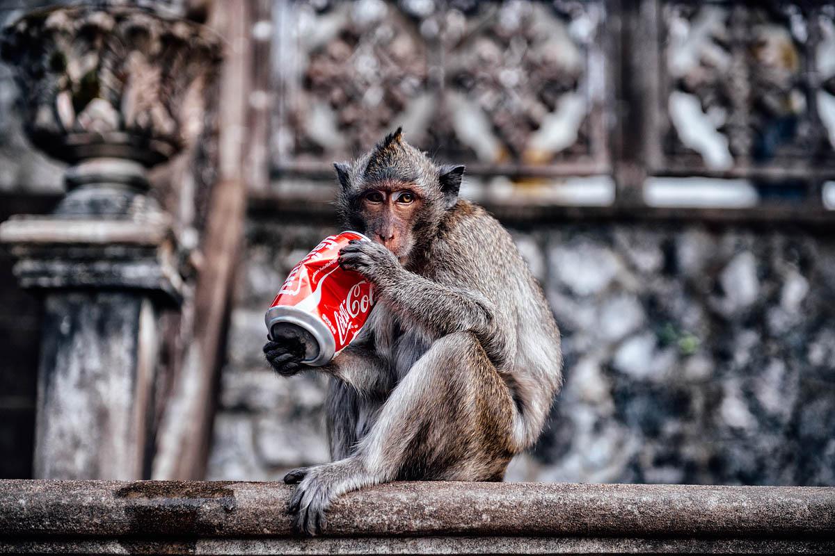 Coca cola monkey