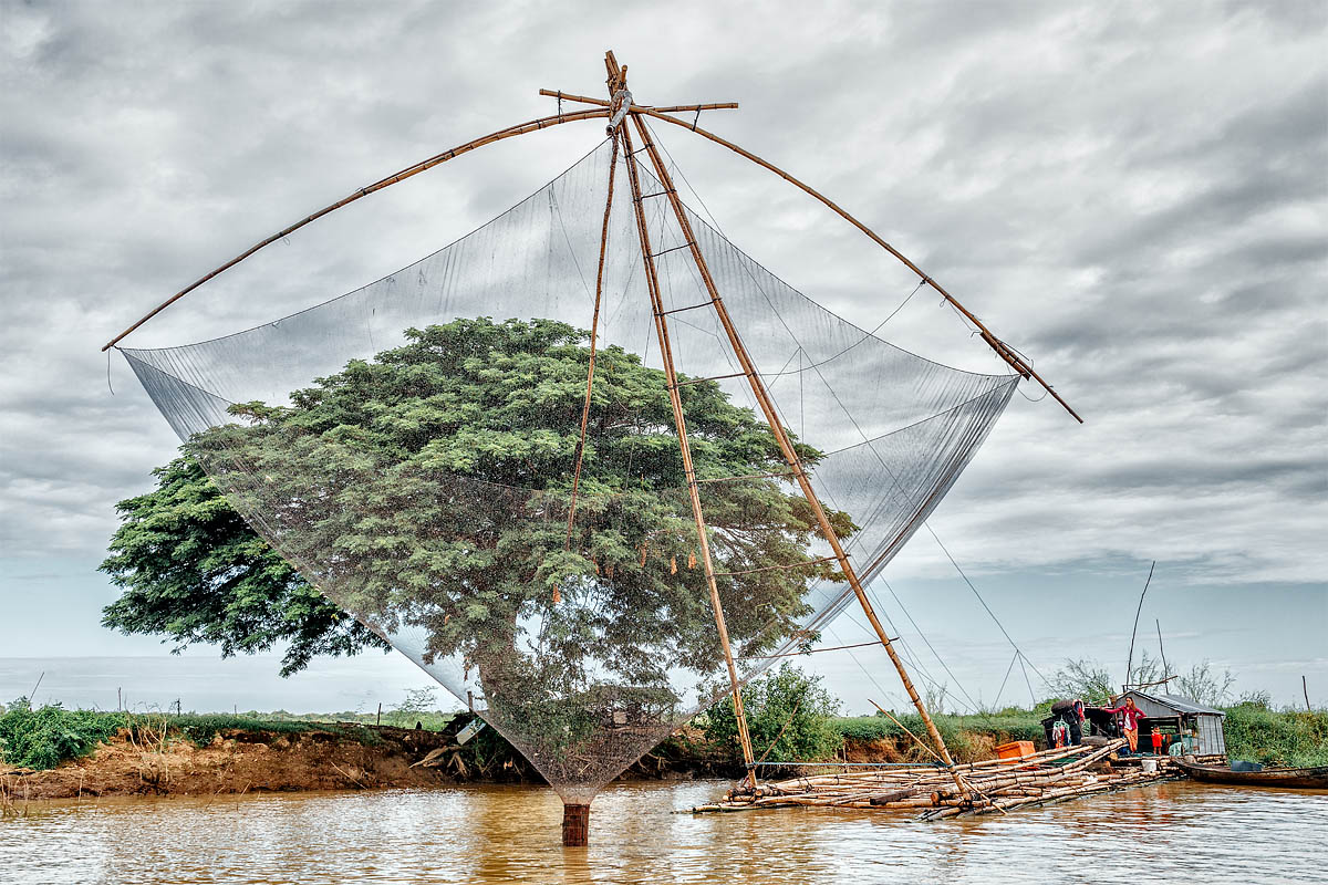 The tree and the fishing net