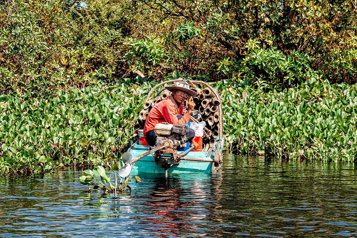 The fisherman in the river plants