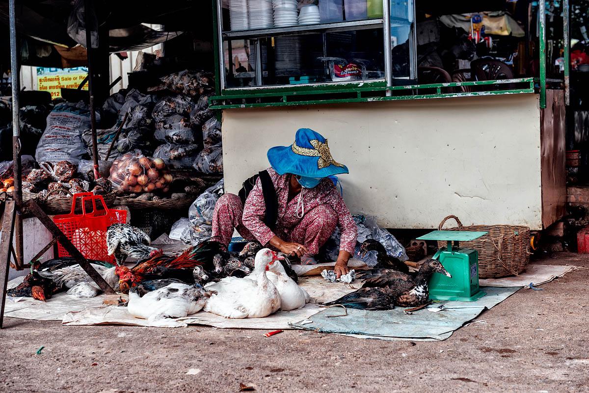 The bird seller