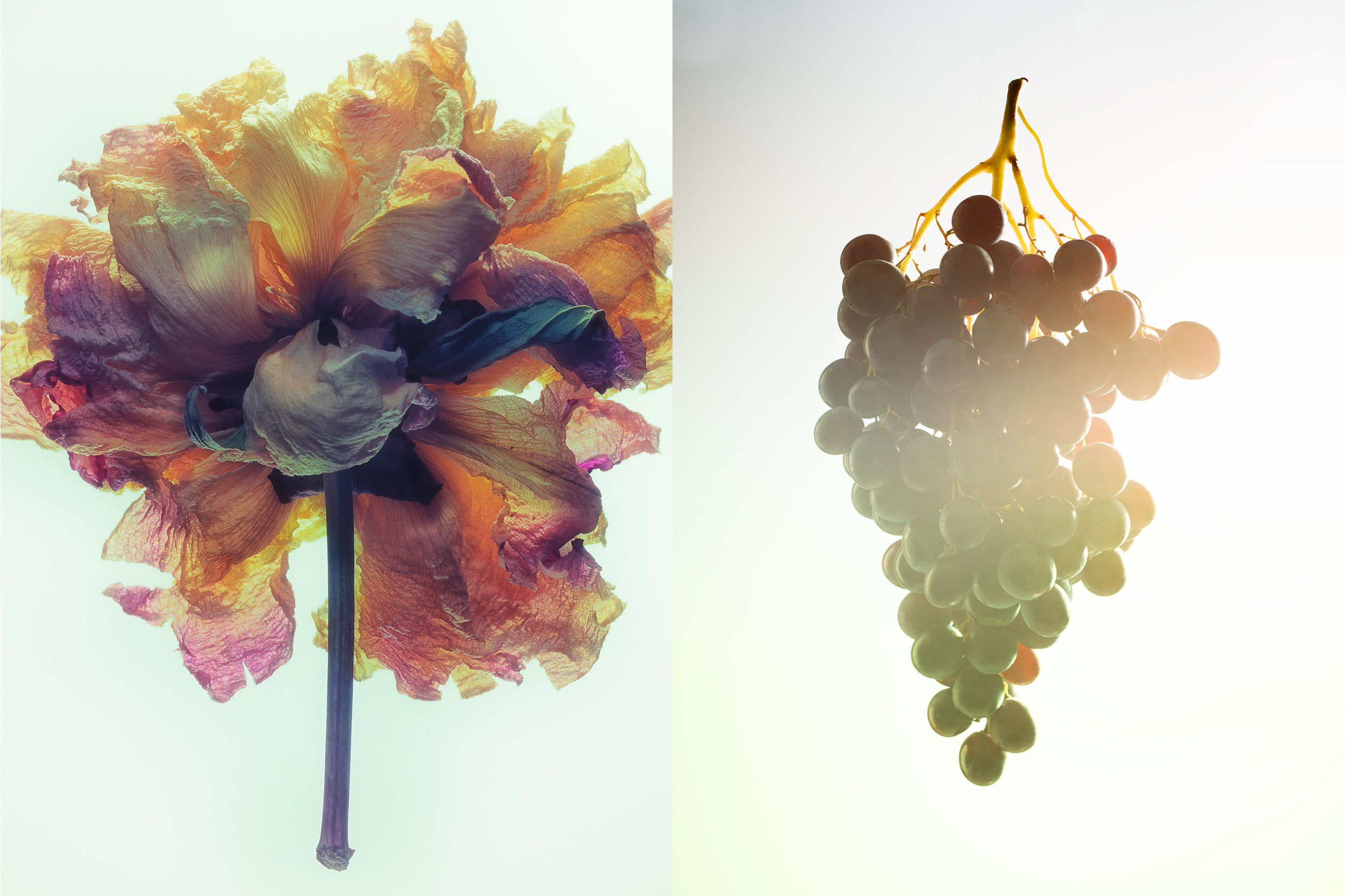 flower-grapes.jpg