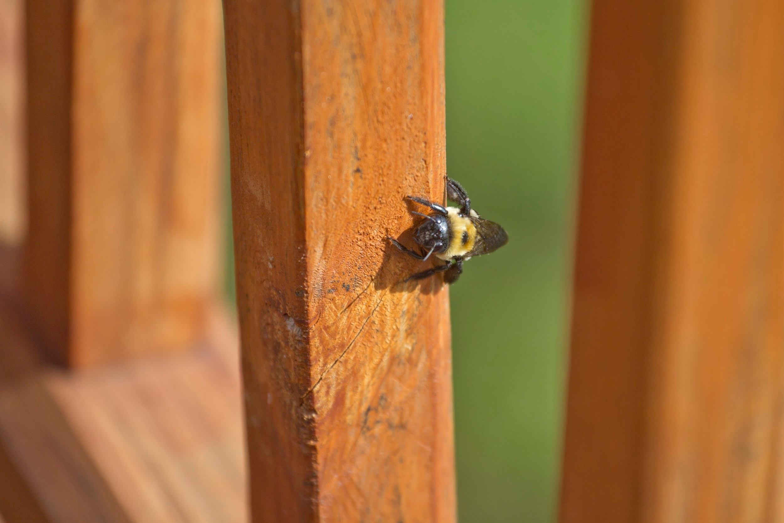 Bee Treatments, Mold and Mildew Removal, High Access Window Washing and Pressure Washing