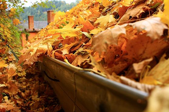 leaves-in-gutter.jpg