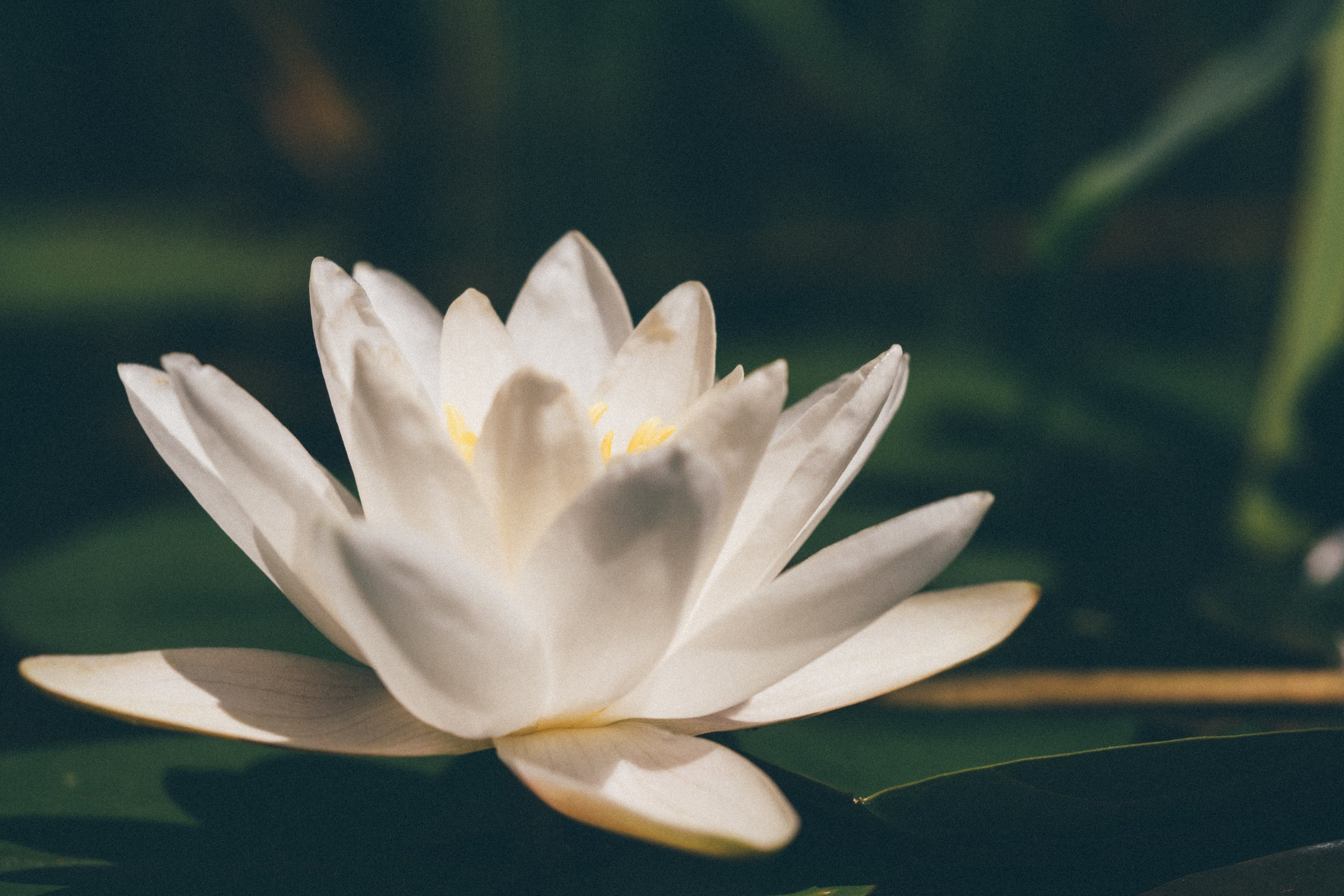 mindfulness flower.jpg