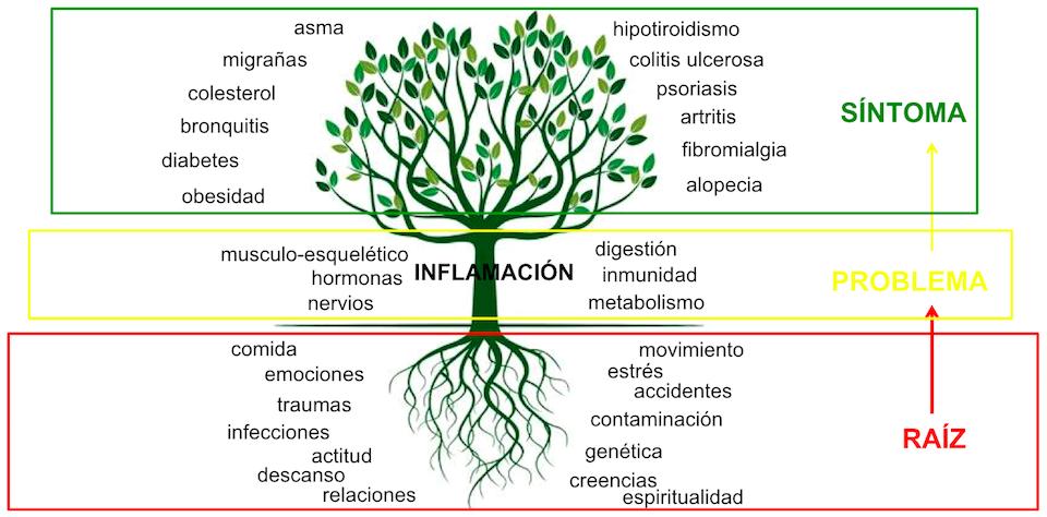 arbol medicina integrativa, functional medicine