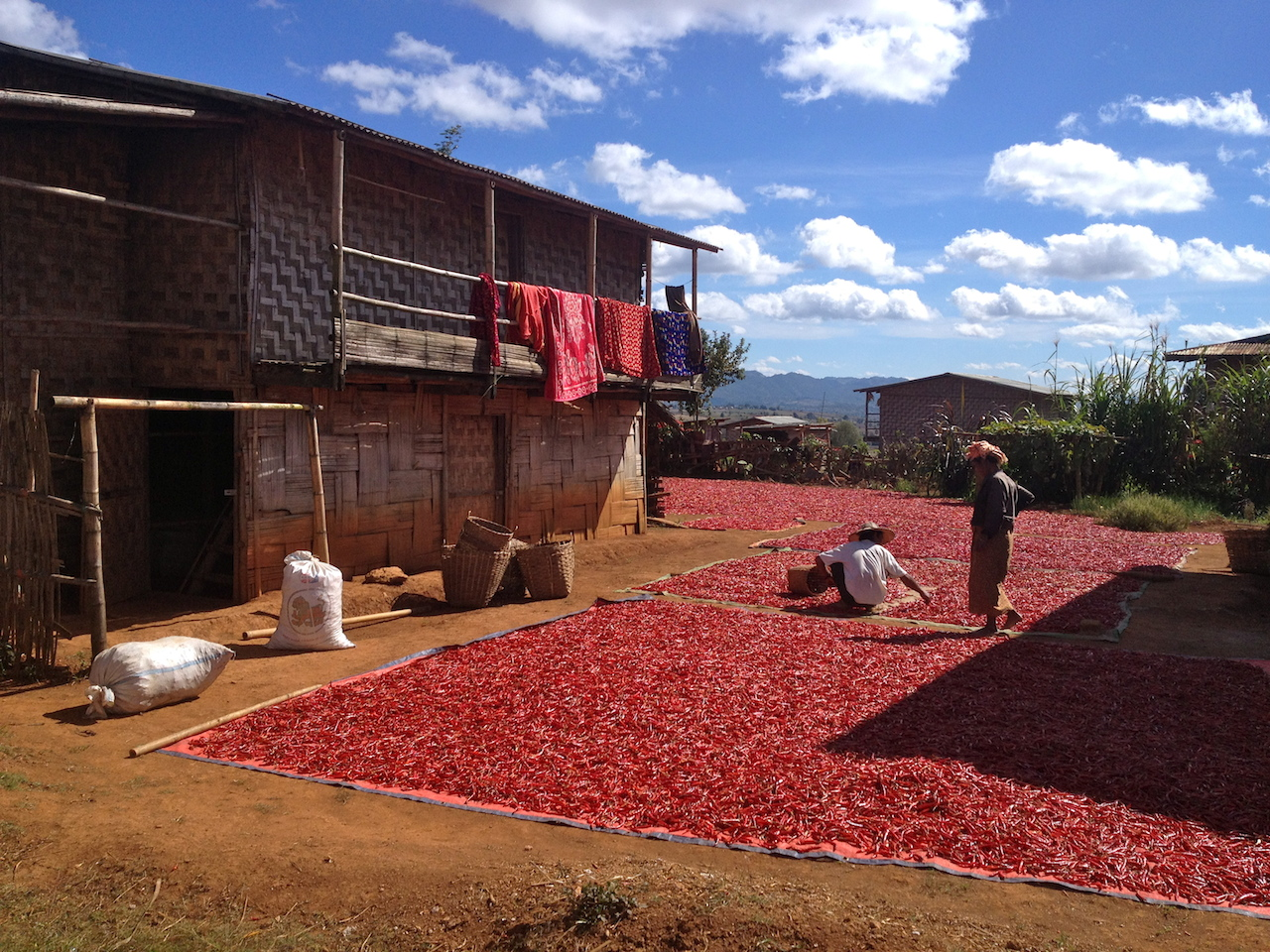 One of the main income for the Palaung villages is chili farming