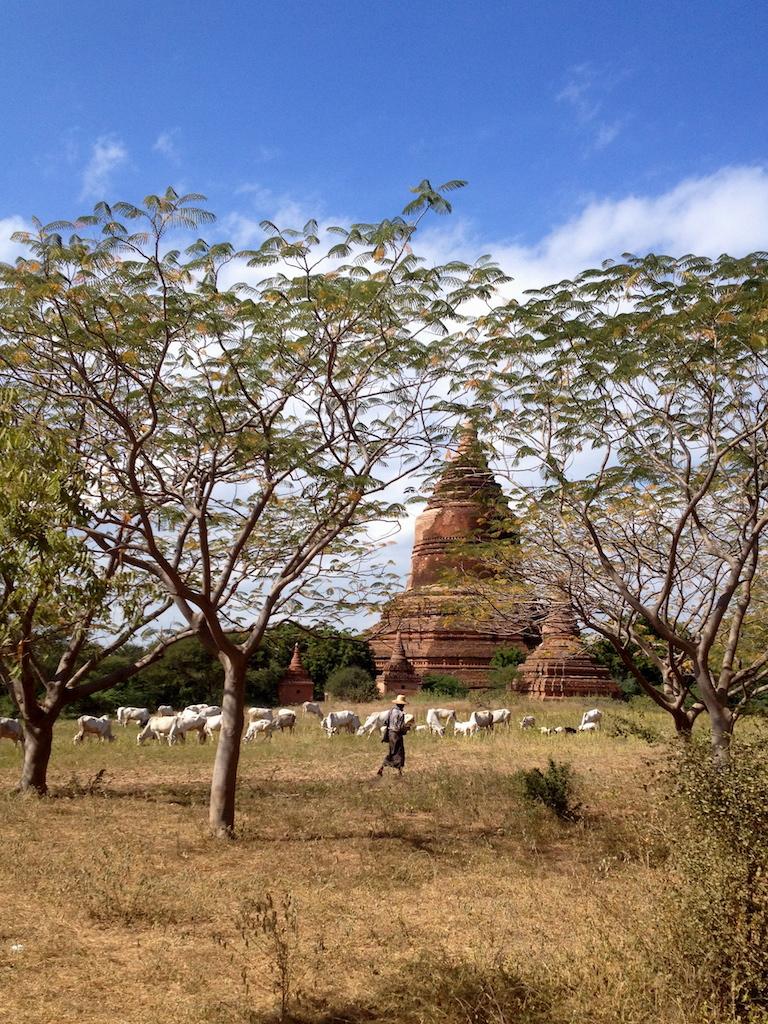 myanmar_bagan_farmers-and-cattle.jpg
