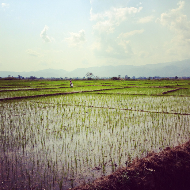 laos_luang_namtha_beer_rice_field2.jpg