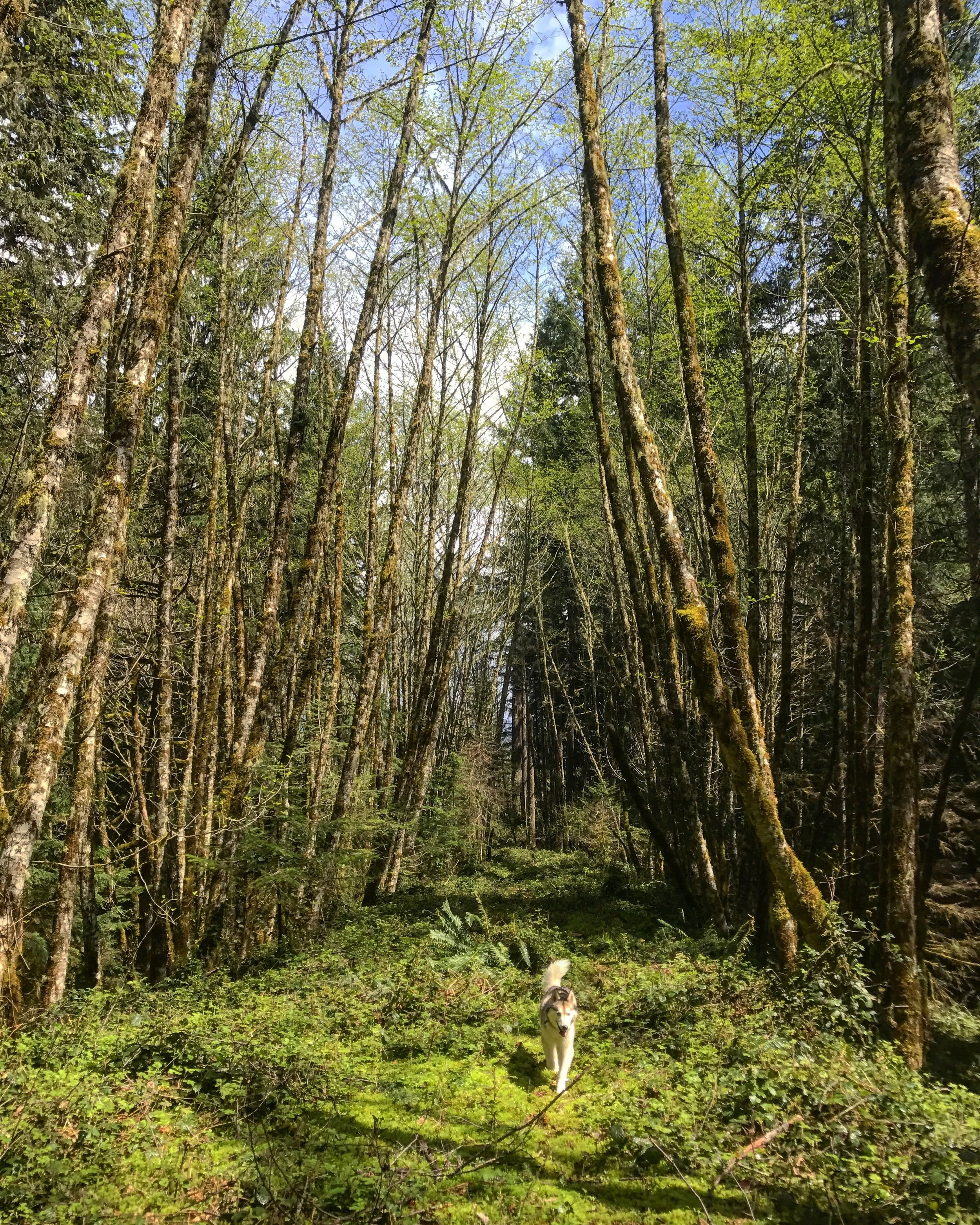 Willamette National Forest OR