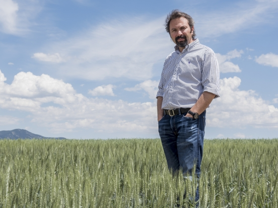 Hikmet Budak, Montana State University professor and Montana Plant Sciences Endowed Chair with the Department of Plant Sciences and Plant Pathology, seen here on Friday, July 8, 2016, at the MSU Post Farm in Bozeman, Mont., recently collaborated with a team of international researchers on the genome sequence for durum wheat, a staple ingredient in pasta. MSU Photo by Adrian Sanchez-Gonzalez