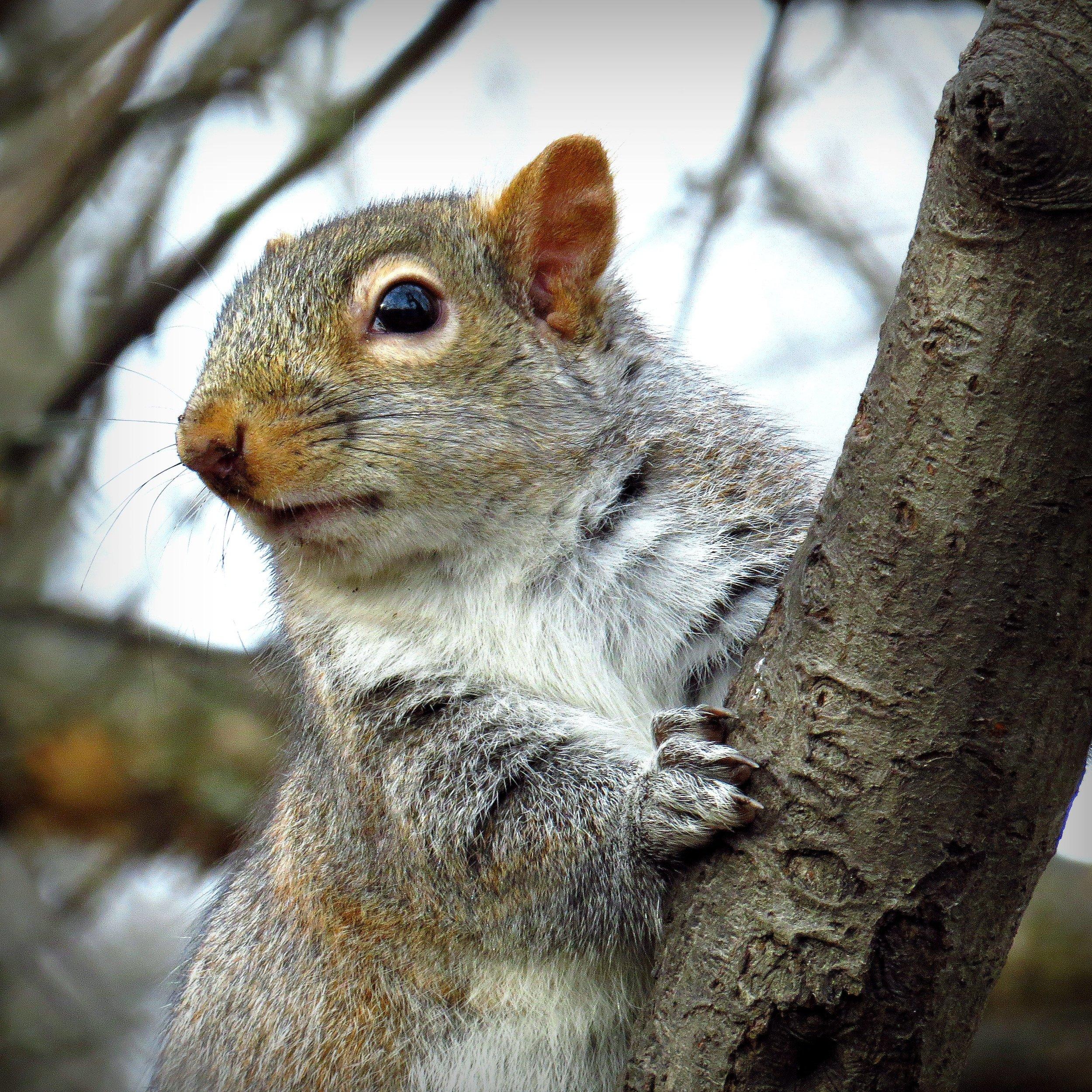 dec8 squirrel.jpg