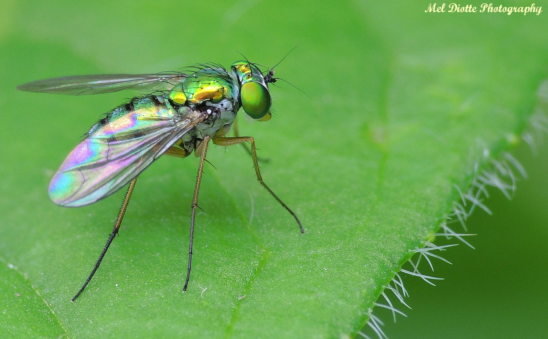 fly5signed.jpg