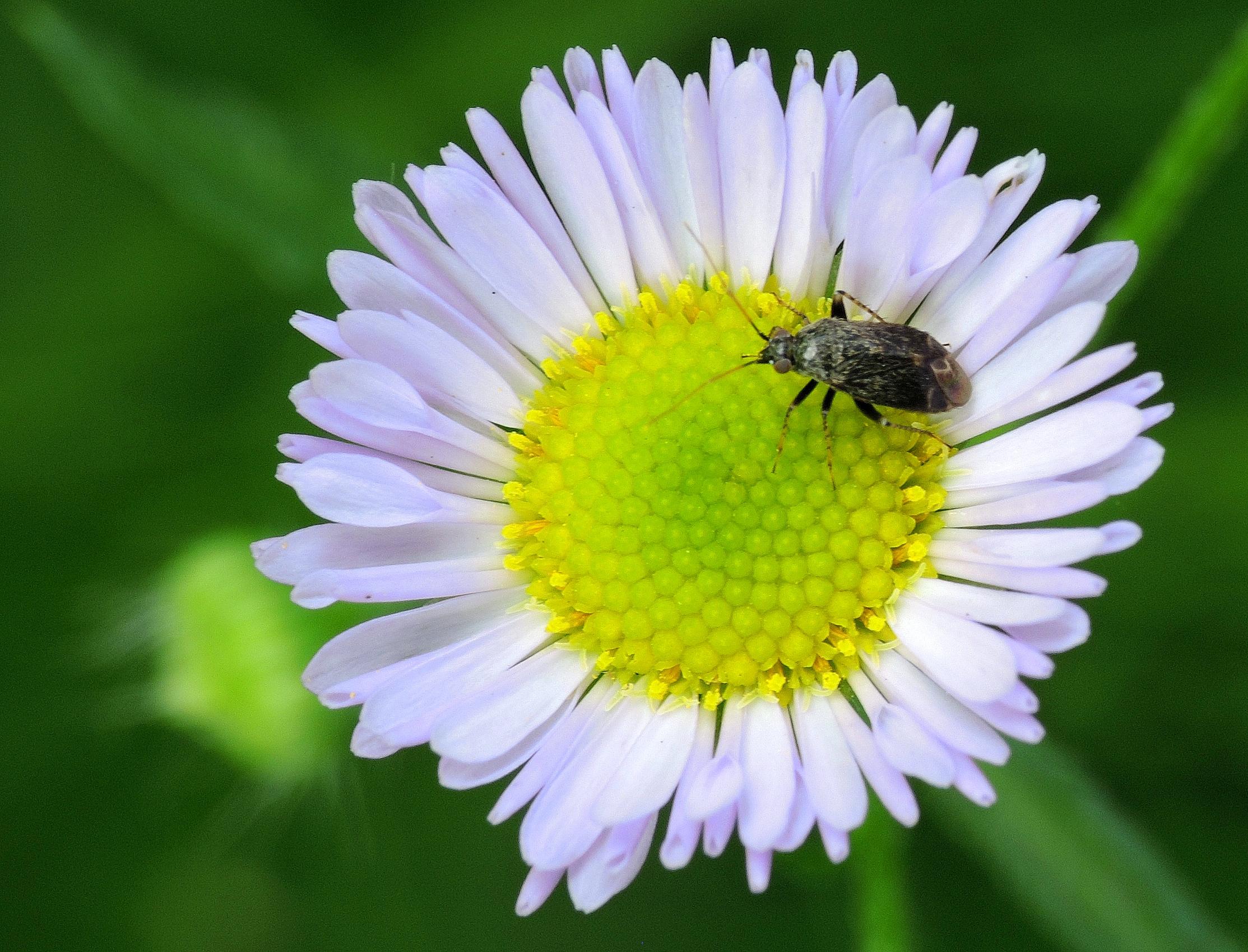 insectd.jpg