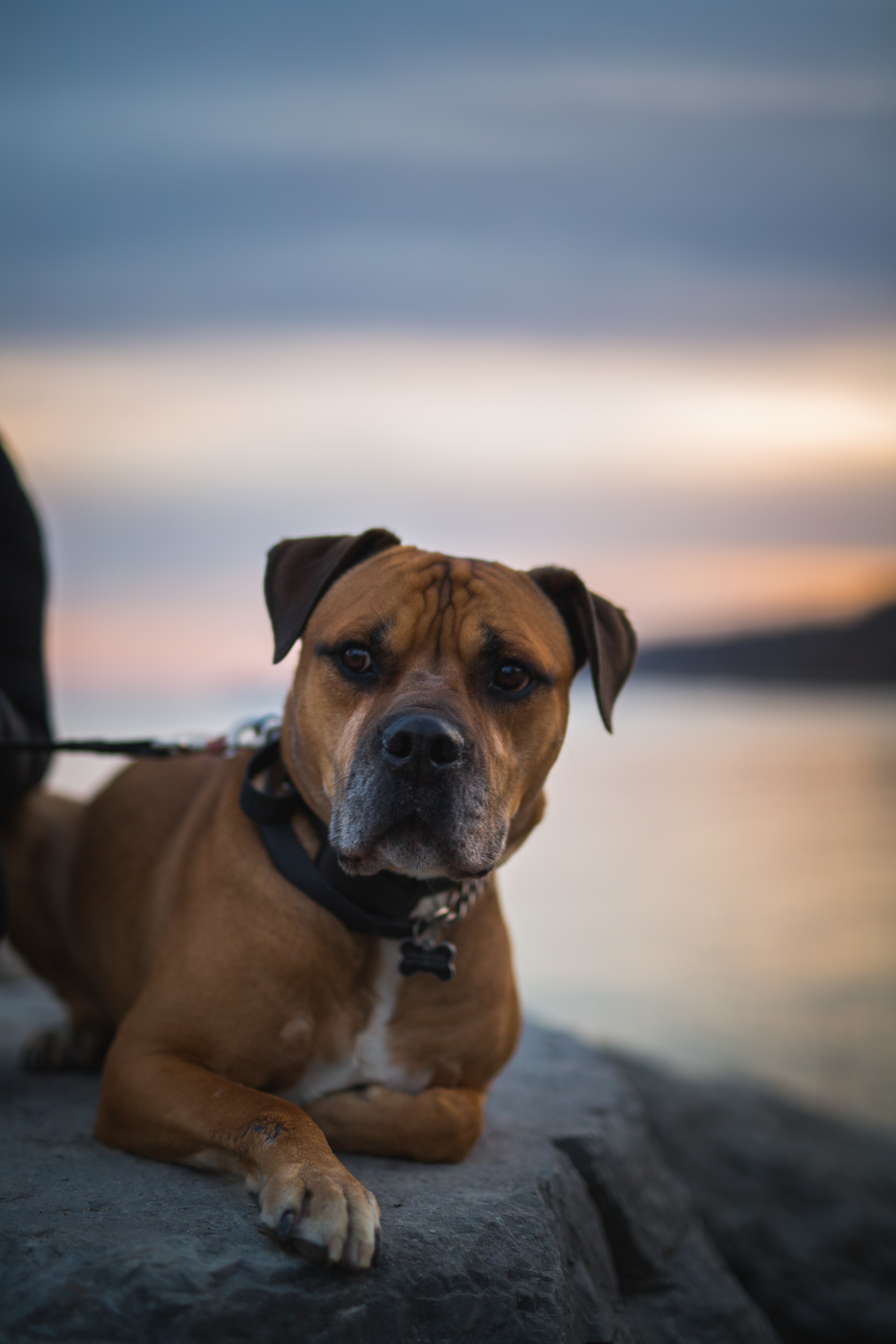 dog relaxing in public