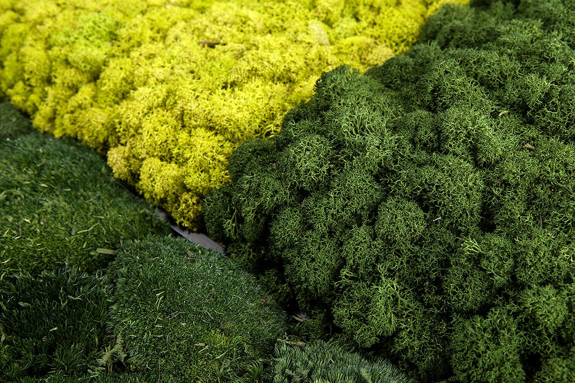 evergreen-ona509-2.jpg
