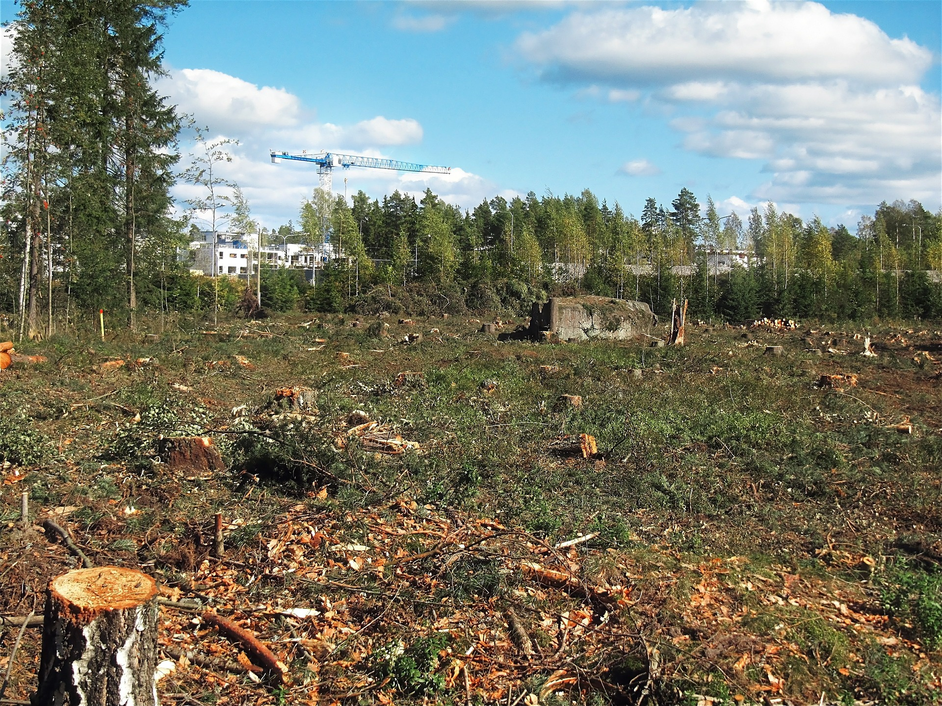 deforested-574185_1920.jpg