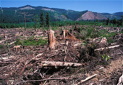 We are fortunate that the vast forests of the Klamath-Siskiyou continue to provide an immense variety of habitats and recreational opportunities. Much of the private, state, and county forests have been previously logged. Clear-cut logging and forest plantations of Douglas fir are commonly seen when flying above the state's forests.