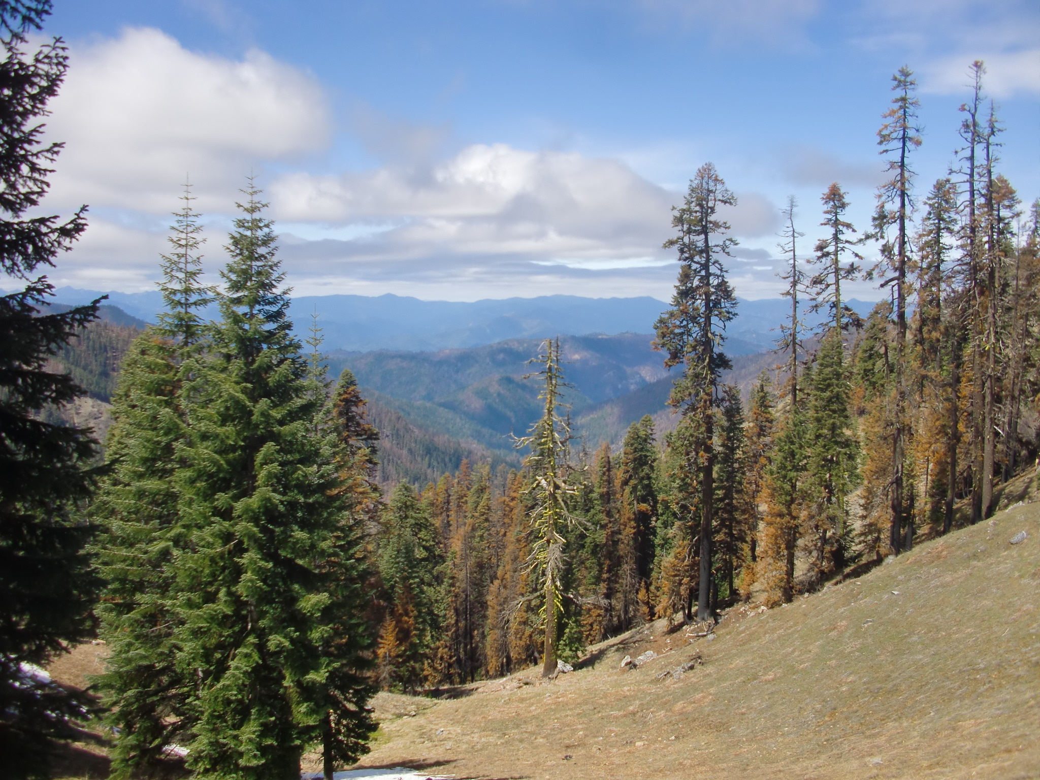 Fires burned on steep slopes in the Klamath National Forest during the summer of 2014. Pictured here is some of the resulting green and blackened trees just months after the mixed-severity burn in the Grider Creek drainage; a critical wildlife corridor that the National Forest proposed for heavy logging post-fire.