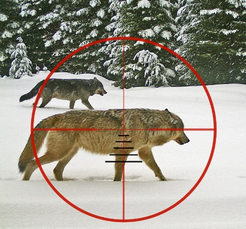 We need the leadership of Governor Kate Brown to prevent these wild creatures from becoming trophies.    Wolves are among the most majestic creatures in Oregon.   They are intelligent, social, and beautiful animals, and they are critical to healthy landscapes. They should never be put in the cross hairs of trophy hunters.  Oregon is preparing to finalize a new plan for managing wolves. Governor Kate Brown has taken a hands-off approach to this plan and we need her to step up and stand for what the majority of Oregonians want.   Wolves should never be killed for fun. Nor should they be killed in an unnatural attempt to increase deer populations. Non-lethal controls are the most effective means of protecting livestock. And wolves must remain on the endangered species list until they are fully recovered.  Please   take a minute to protect   Oregon wolves by making your voice heard.