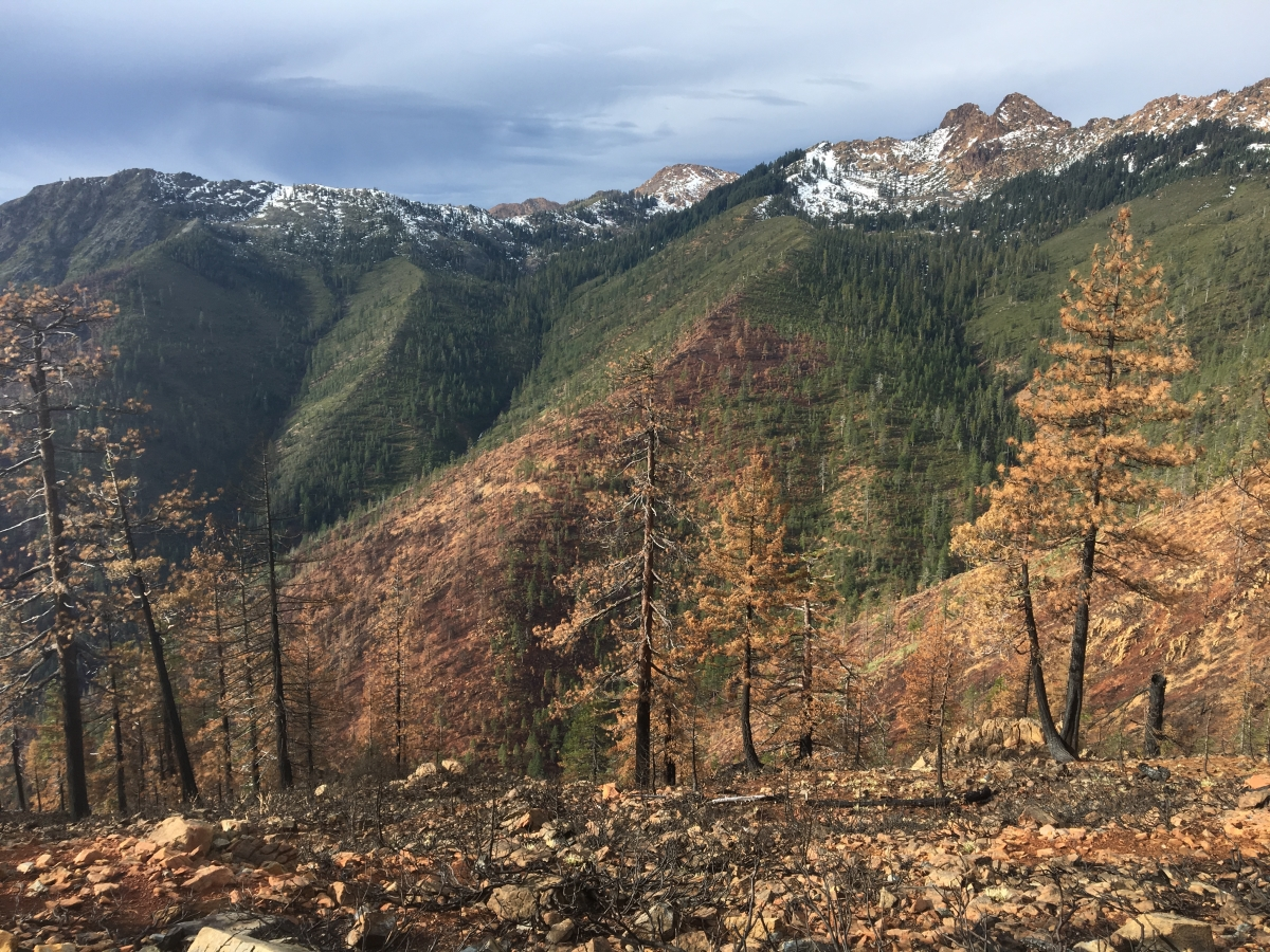 Fire effects from the 2017 Abney Fire, part of the Miller Complex Fires, on the Siskiyou Crest.