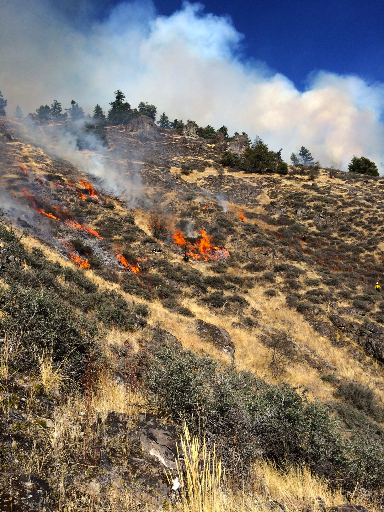 Getting fire back on the ground in controlled conditions can reduce fuels and restore meadows and open forest, potentially reducing future fire severity.