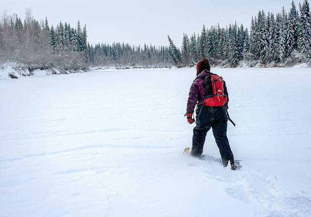 Wild winter snowshoe adventures await