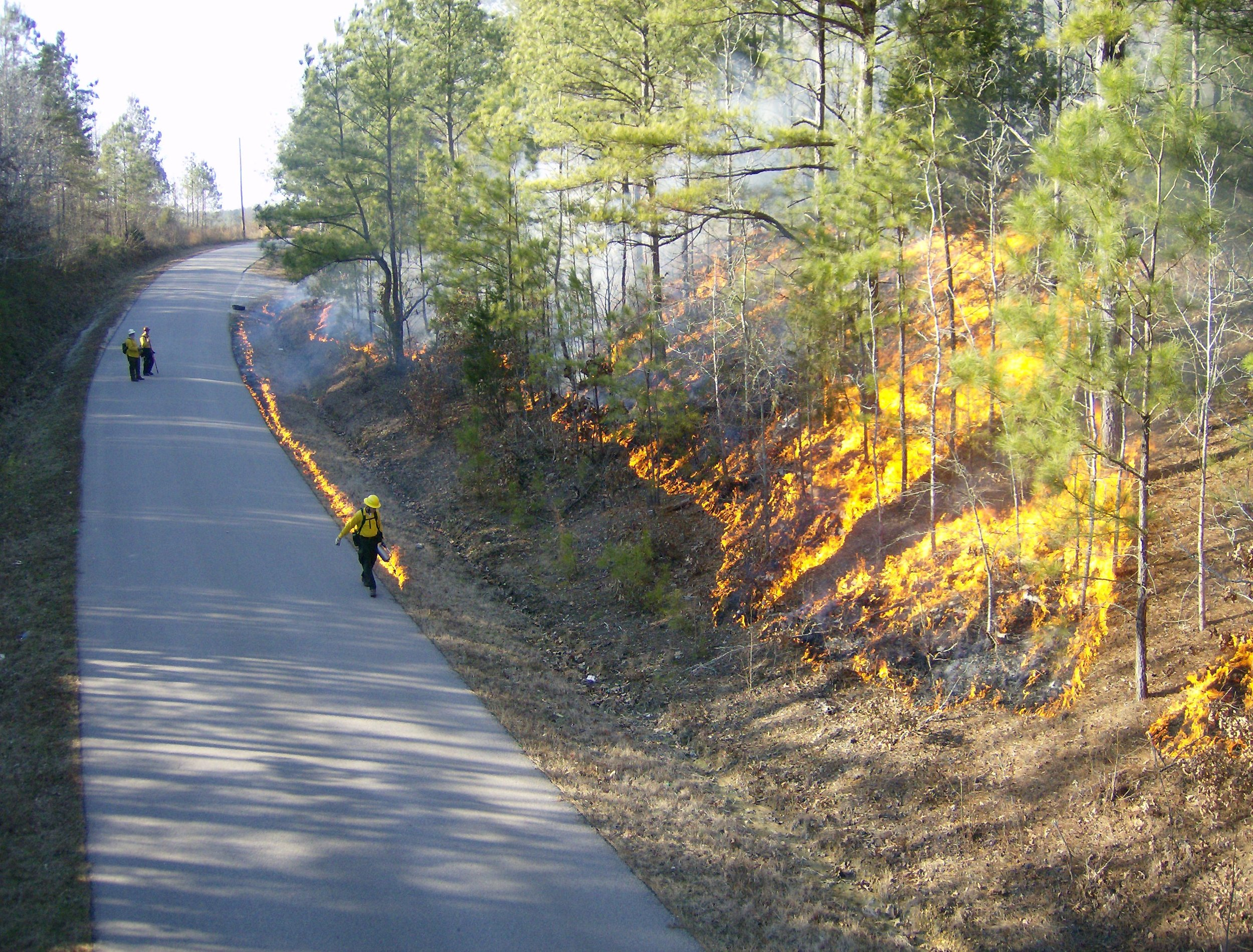 Firefighters do a prescribed burn to consume fuels ahead of a fire Photo: USFS