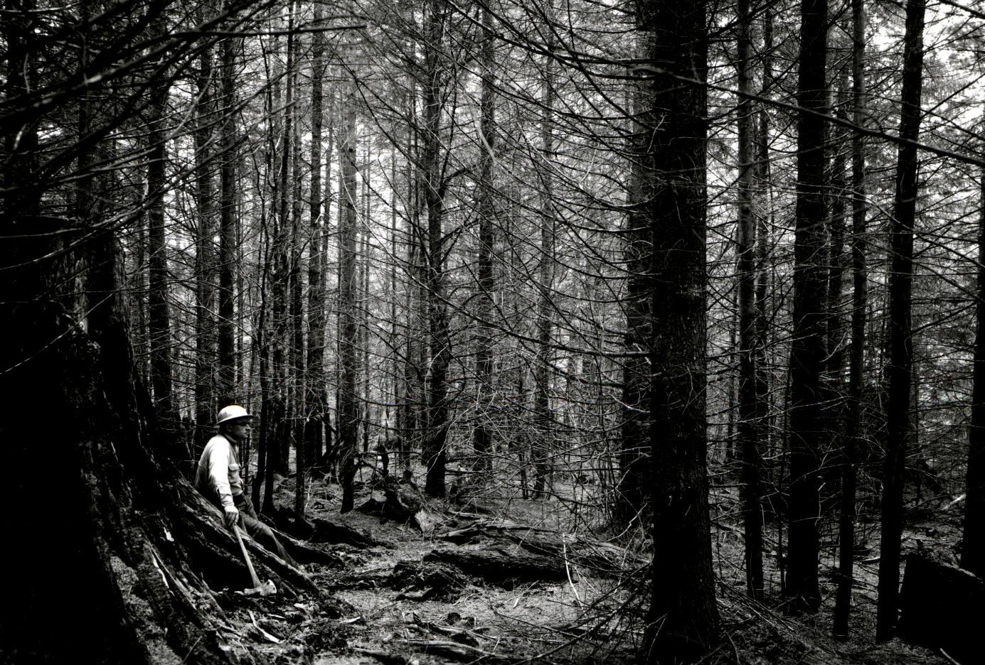 The legacy of plantation forestry is a hot topic in Oregon, pictured here a 33 year old spruce plantation in 1963.  Photo: USDA
