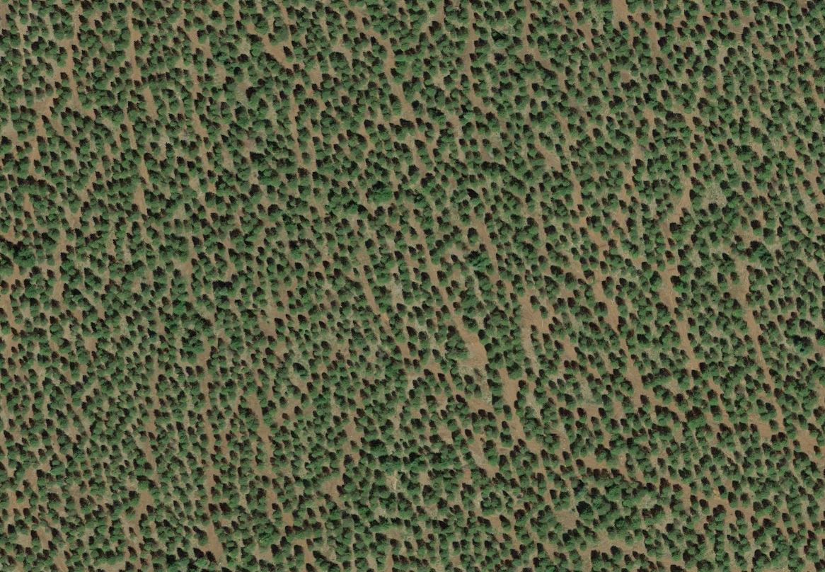 clearcut_plantation7.JPG
