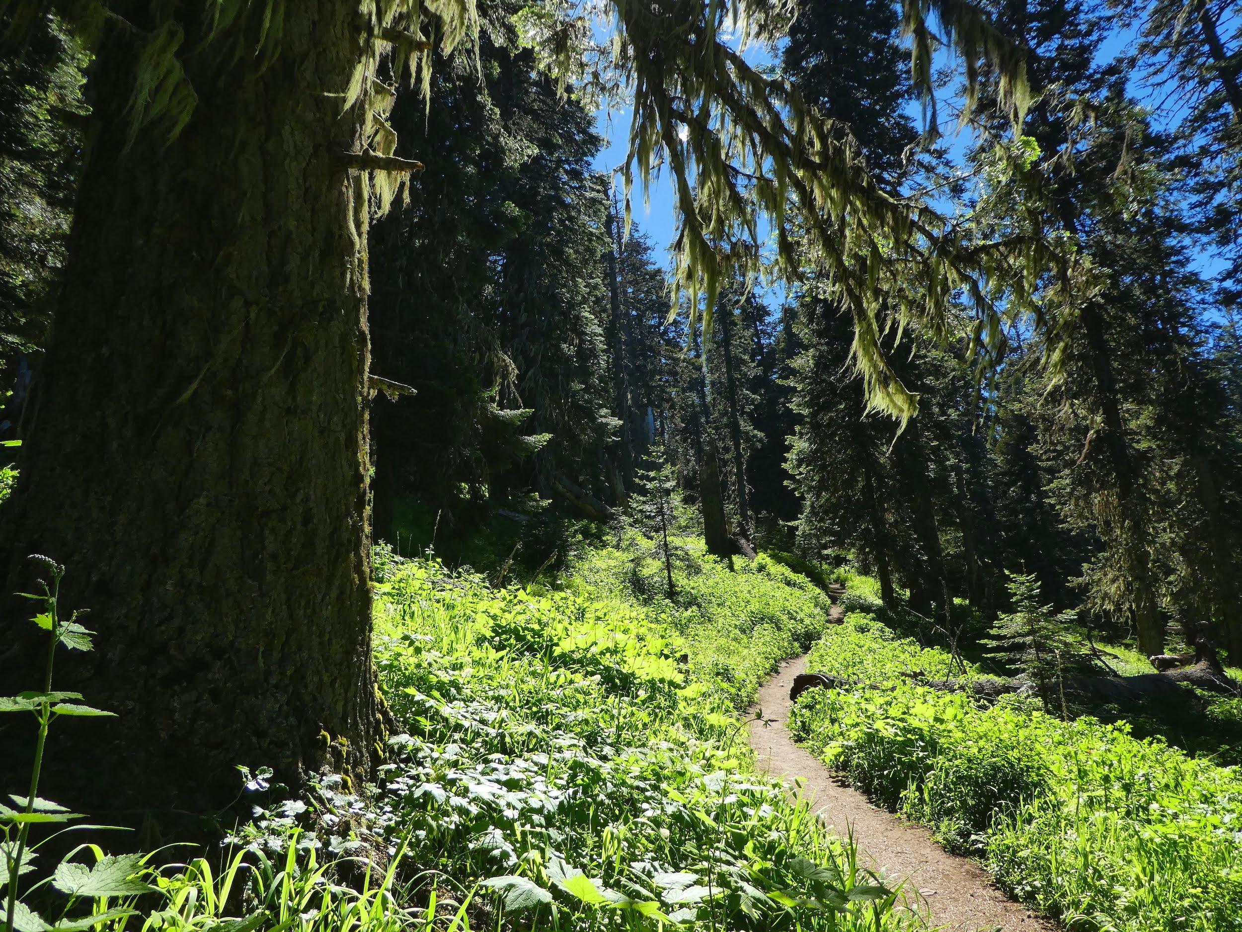 Grizzly Peak KS Wild Ashland Oregon