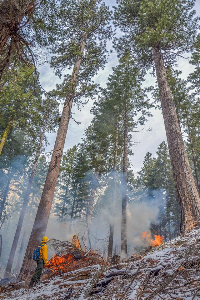 Planning and implementation of fuels projects aimed at restoring forests and protecting communities is at a standstill during the shutdown. Photo by Ashland Forest Resiliency.