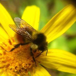 Beeyellowflower.jpeg